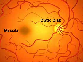 graphic of the retina